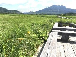 尾瀬の夏は眩しい緑の写真・画像素材[4883711]
