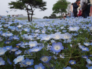 お花畑の写真・画像素材[216433]