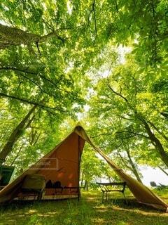 公園の木の写真・画像素材[4812699]