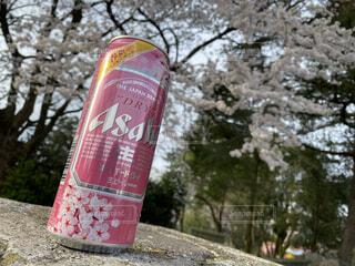 桜とビールの写真・画像素材[4813434]