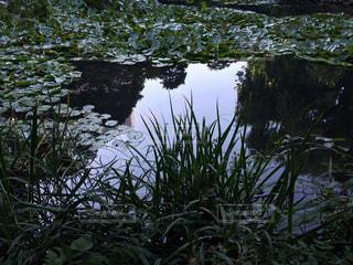 水面の写真・画像素材[218181]