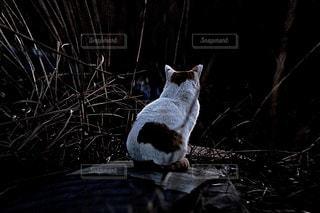暗闇の中で立っている猫 - No.961939