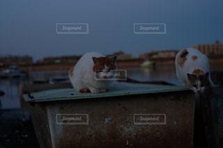 ベンチに座って猫の写真・画像素材[961942]