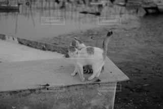 水中で立っている犬の写真・画像素材[961944]