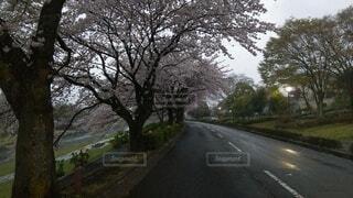 道路の脇に木がある道の写真・画像素材[4816566]