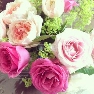 薔薇の花束の写真・画像素材[1003494]
