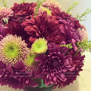 菊のアレンジメントの写真・画像素材[1003592]