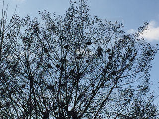 サルスベリにとまる鳥の写真・画像素材[1003614]
