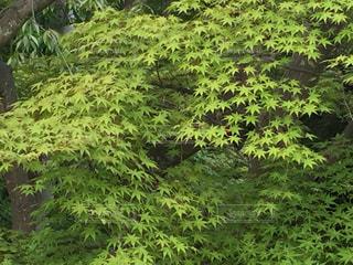 森の中の緑の植物の写真・画像素材[1003637]