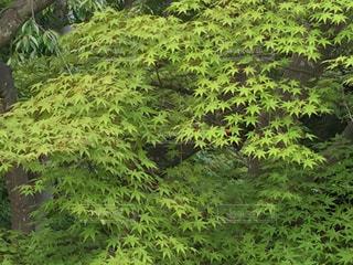 森の中の緑の植物の写真・画像素材[1003638]