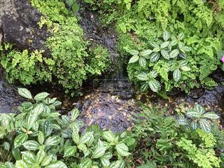 庭園の緑の植物の写真・画像素材[1003785]