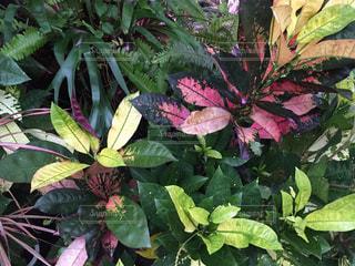 観葉植物の写真・画像素材[1003789]