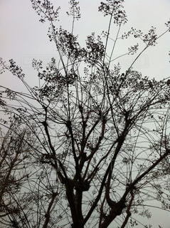 冬枯れの写真・画像素材[1003840]
