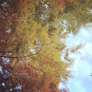 近くの木のアップの写真・画像素材[1003844]