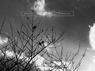 木と鳥のシルエットの写真・画像素材[1005470]
