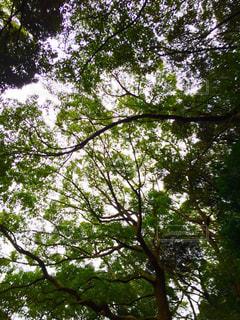 木漏れ日の写真・画像素材[1005553]
