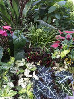庭の植物の写真・画像素材[1005556]