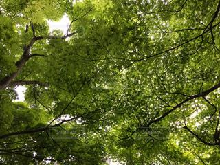 新緑の写真・画像素材[1005562]