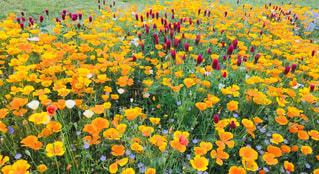 カラフルな花の写真・画像素材[1006609]
