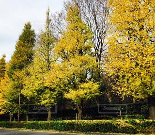 公園の木の写真・画像素材[1010300]