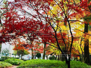 公園の木の写真・画像素材[1010354]