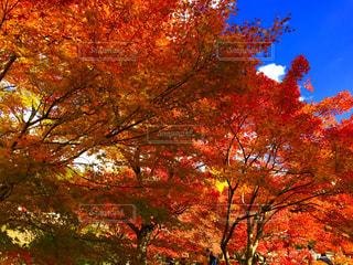 空と紅葉の写真・画像素材[1010361]