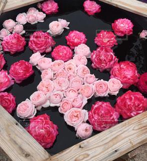 水に浮かぶ薔薇の花の写真・画像素材[2915020]