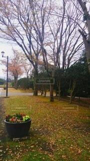 花園のクローズアップの写真・画像素材[4818506]