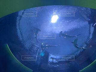 シュモクザメの写真・画像素材[4818513]