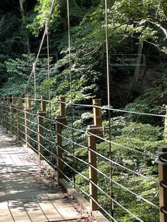 吊り橋の写真・画像素材[4835974]