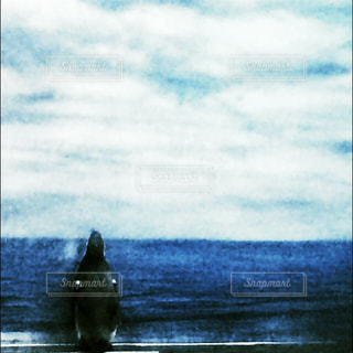 海 - No.217682