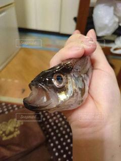 魚の写真・画像素材[282671]