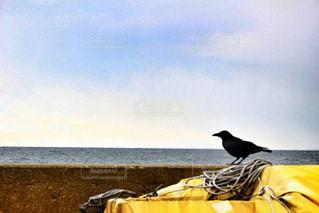 自然の写真・画像素材[359896]