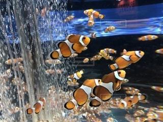 水の下で泳ぐ魚の写真・画像素材[4840737]