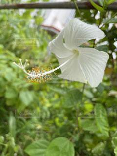 白いドレスの写真・画像素材[4826159]