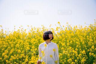 春 - No.413333