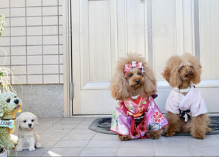 カメラにポーズを鏡の前で座っている犬の写真・画像素材[911960]