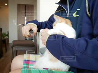 猫の爪切りの写真・画像素材[1082762]