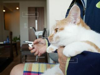 猫の爪切りの写真・画像素材[1082765]