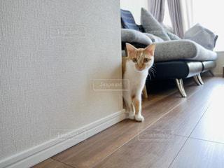 猫 - No.1089767