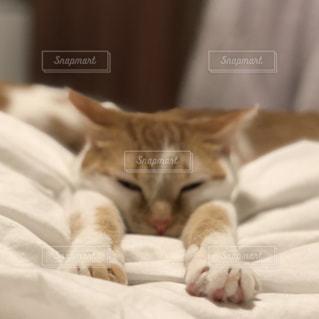 ベッドの上で横になっている猫の写真・画像素材[1125915]