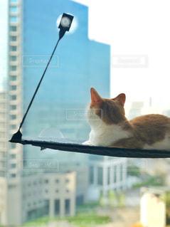 猫の写真・画像素材[1157316]