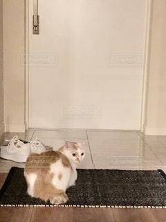 白い壁の上に座っている猫 - No.1189298
