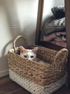 バスケットに座って猫の写真・画像素材[1189300]