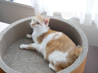 バスケットに座って茶色と白の猫の写真・画像素材[1250348]