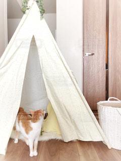 ティピテントと猫の写真・画像素材[1315157]