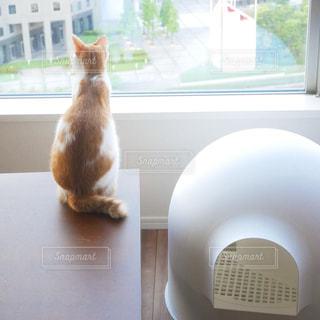 猫の写真・画像素材[1422321]