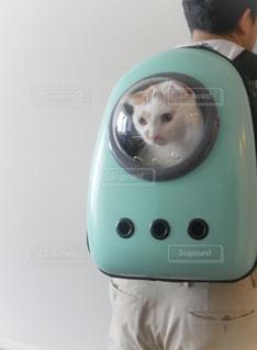 猫の写真・画像素材[1422322]