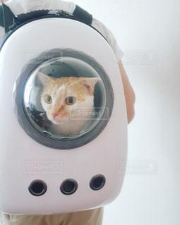 猫の写真・画像素材[1422323]