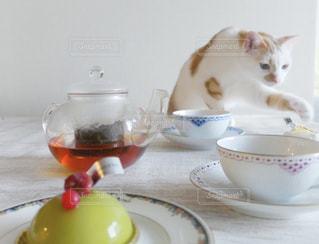 猫の写真・画像素材[1422324]